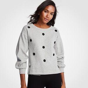 NWT Ann Taylor Grey Dot Sweatshirt